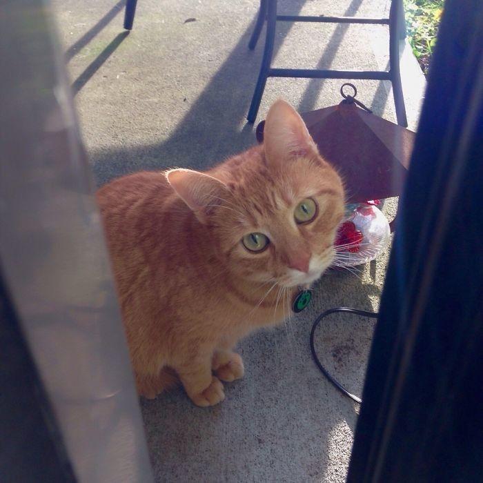 """""""Я звала свою кошку с улицы, шурша пакетиком корма. На зов пришло неизвестное создание"""""""
