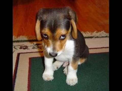 Funny dog show  (Ποτέ δεν θέλω πια να ξαναρθείς) (+playlist)