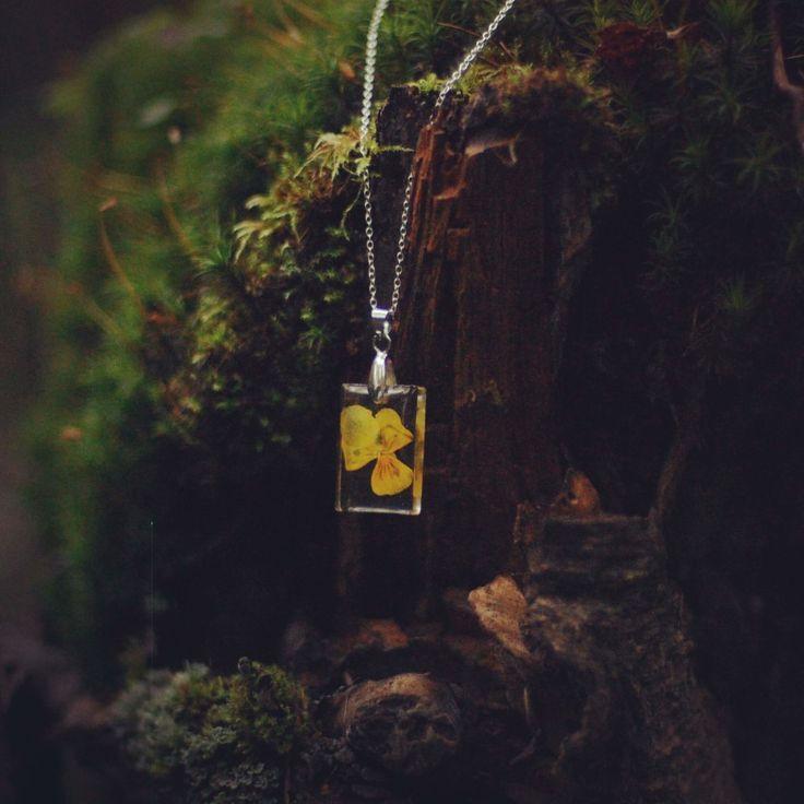 Ekohartsi saa kukat näyttämään eläviltä, keltainen orvokki metsässä