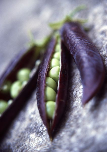Colors- Aubergine & pea green. Diana Miller Photography.