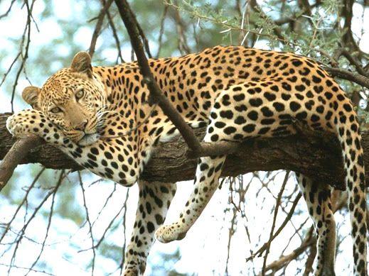 M s de 1000 im genes sobre felinos asombrosos en pinterest for Muebles mato leon