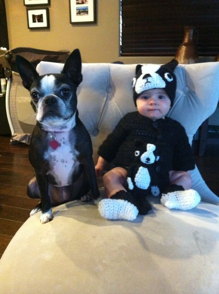 pug bebe