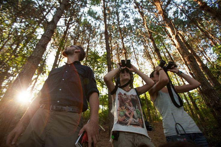 Selva Yabotí #Selva #Litoral #Naturleza