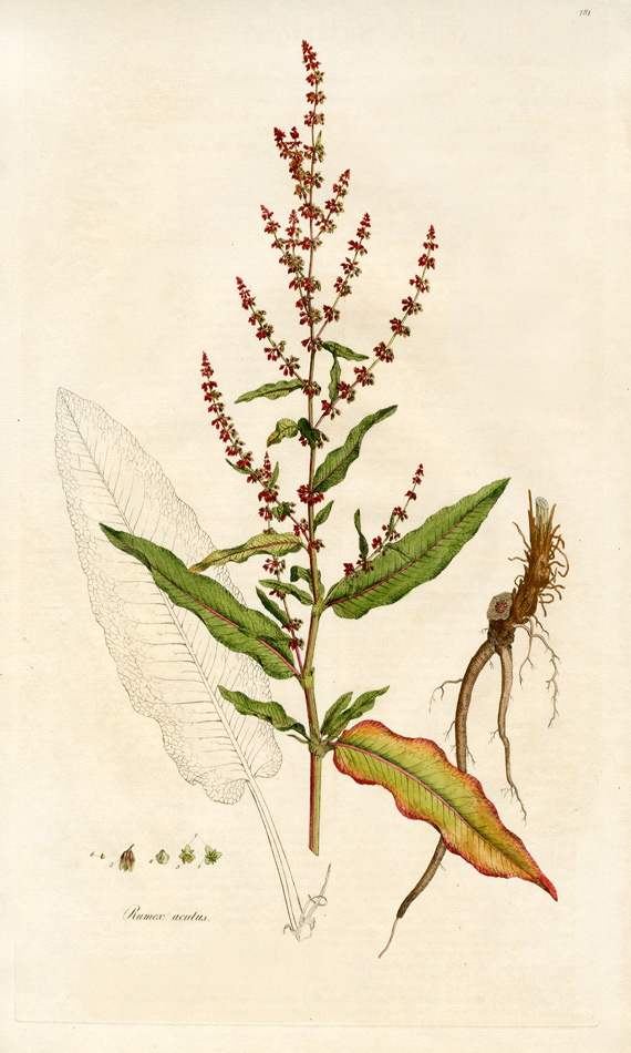 William Curtis Flora Londinensis Prints 1775