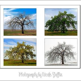Seasons of a tree.  Photography by Nicole Griffin