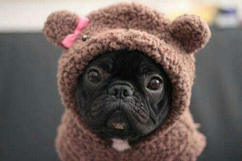Perfectly precious pug!