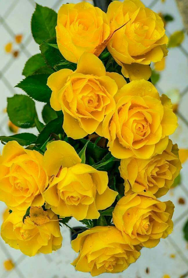 All About Yellow Flowers For Your Garden & Put A Smile On