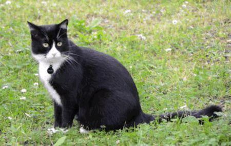 ORLANDO IN CHIANTI: SMARRITO GATTO NERO E BIANCO. RICOMPENSA 300 EURO http://terzobinario.blogspot.it/2014/06/orlando-in-chianti-smarrito-gatto-nero.html