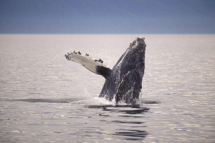 Alaska: un vero spettacolo della natura!