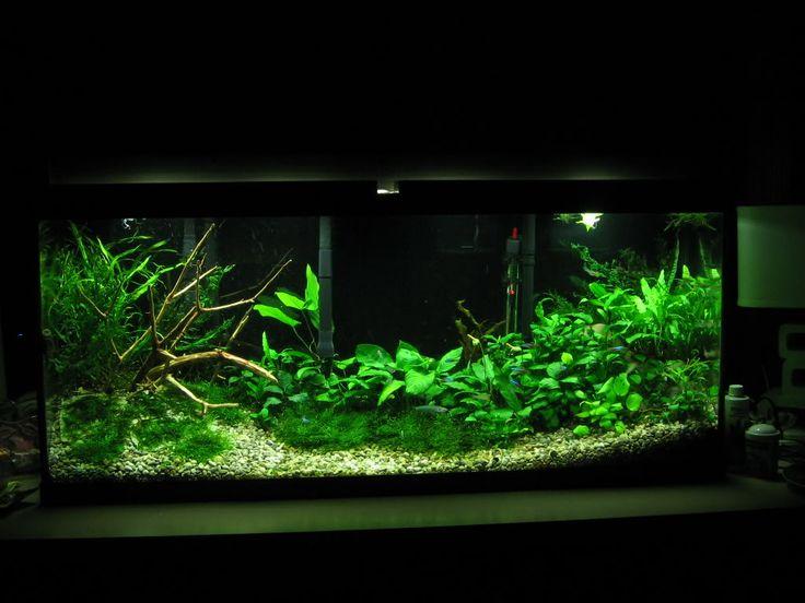 Freshwater Aquarium Design Ideas advices fish tank decoration ideas Find This Pin And More On Aquarium Ideas By Valenciaja