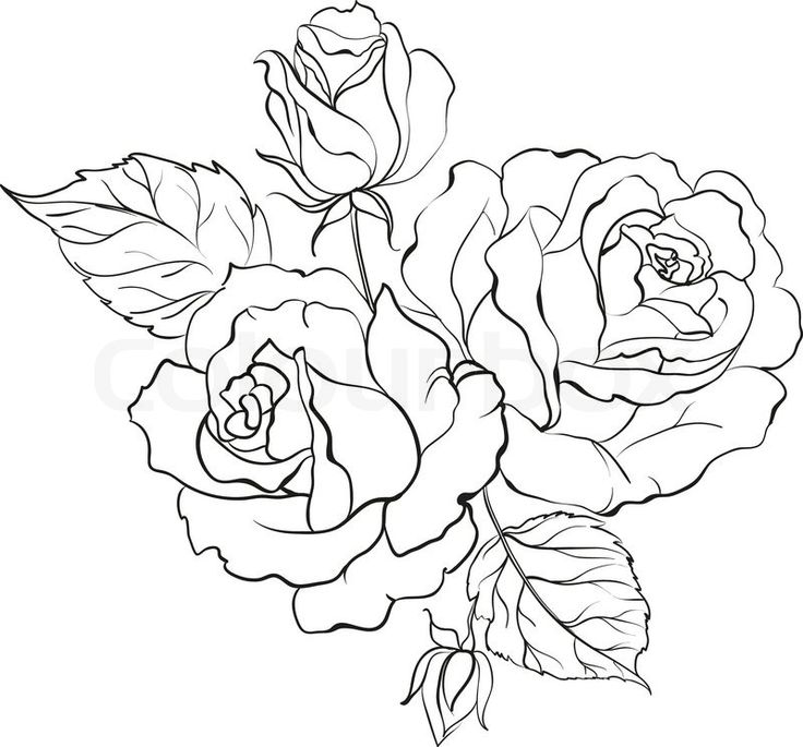 Line Drawing Rose Flower : Roses drawings outlines imgkid the image kid