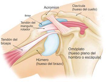 Dolor de hombro y problemas comunes del hombro (Shoulder Pain and Common Shoulder Problems)-OrthoInfo - AAOS