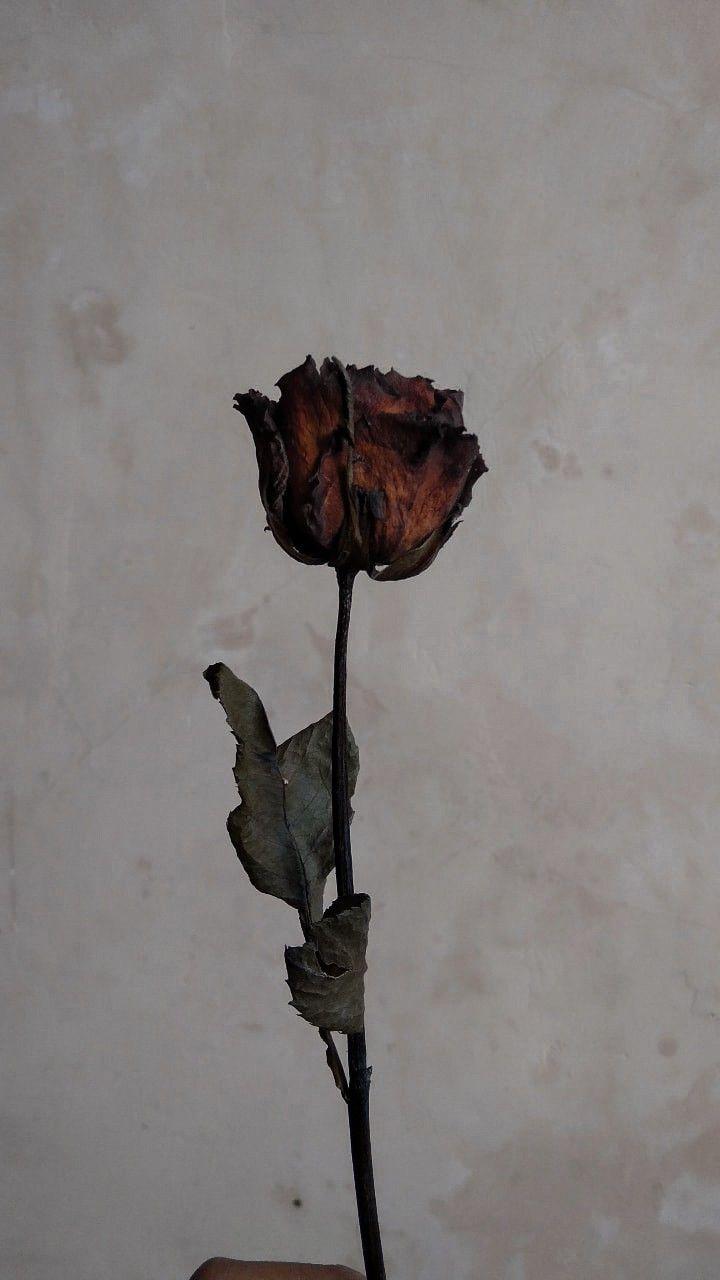 Pin Oleh Ratih Ari Ne Na Di A Gambar Mawar Seni Bunga Seni Fotografi