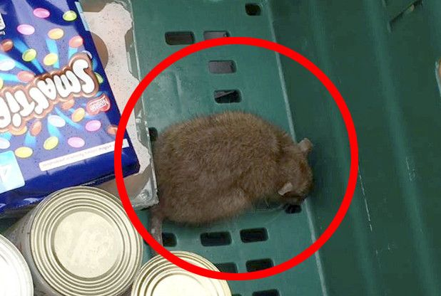 Teenager passes out after winning free rat in her Tesco home delivery