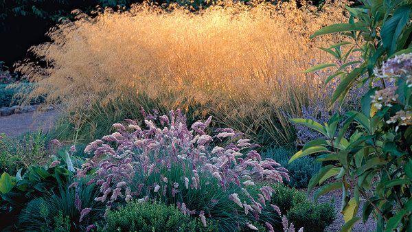 9 New And Unusual Ornamental Grasses Desert Landscaping Ornamental Grasses Winter Lawn