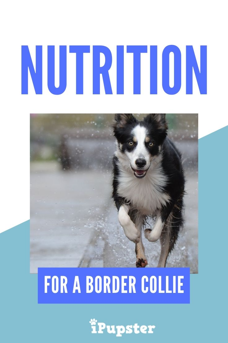 4 Of The Best Dog Food For Border Collies In 2020 For Every Budget Best Dog Food Border Collie Dog Food Recipes