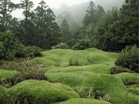 Peter Dombrovskis.  Cushion plants, Mount Anne