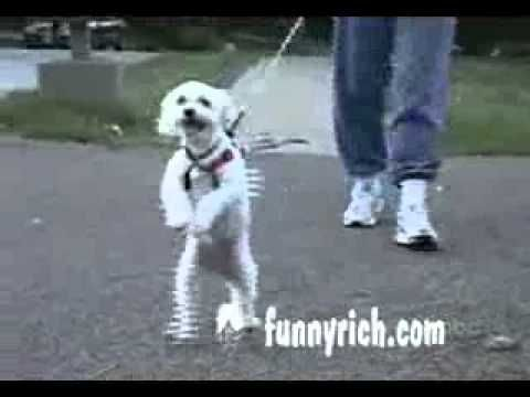 compilation of funny dogs