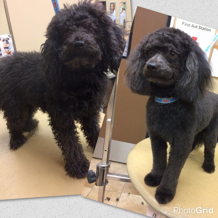 17 best images about before after dog grooming for A cut above grooming salon