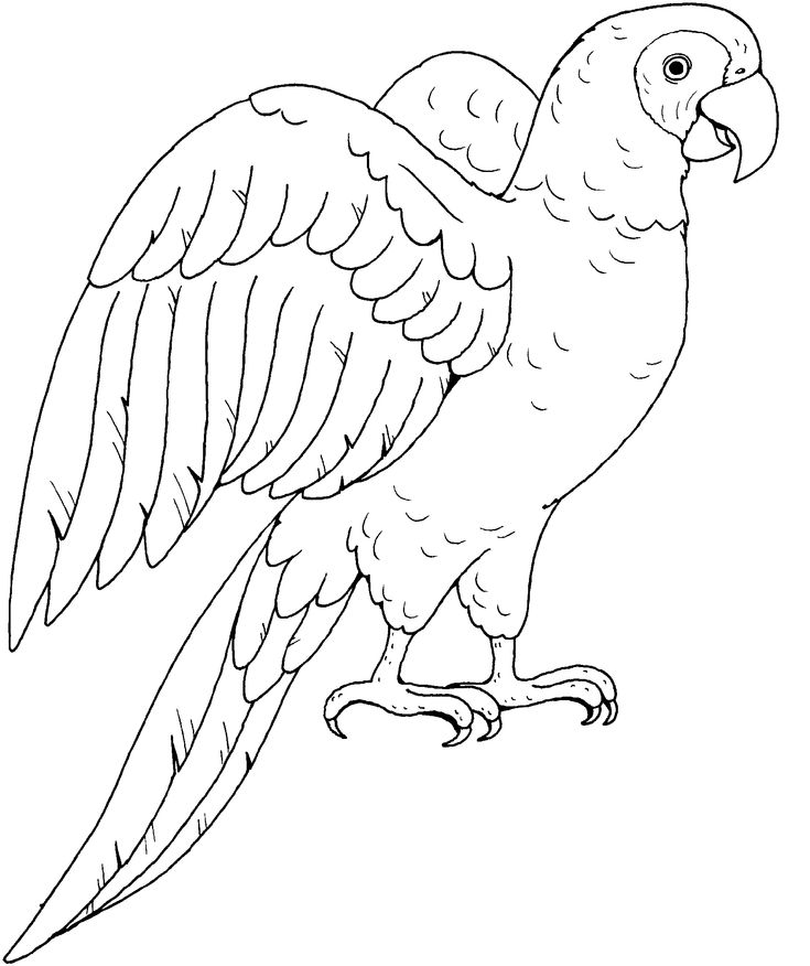 types of birds coloring pages - photo#10