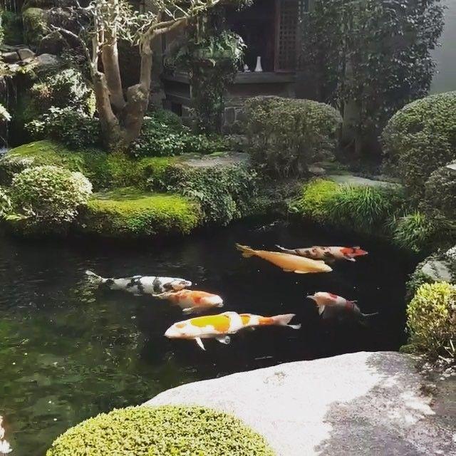 3229f259a9d4434c46c2145f6b84adcd - The Koi Whisperer Sanctuary & Japanese Gardens