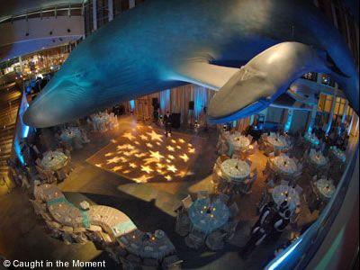 Long Beach Weddings Aquarium Of The Pacific Unusual Los Angeles Wedding Venues 90802