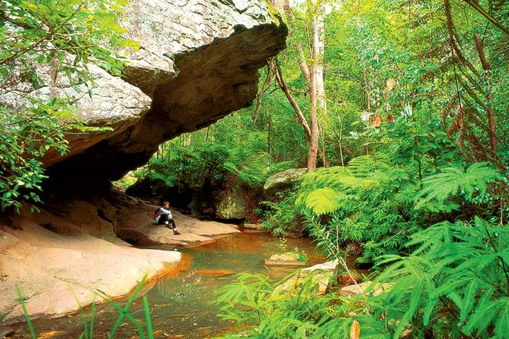 Carnarvon Gorge, Cania Gorge, Bunya Mtns | guided walking holiday | Auswalk