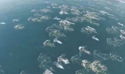 This is amazing collaboration of Videos from around the world of evidence that proof the existence of REAL Mermaids. Judge for yourself. The Merfolk phenomenon continues, as a video pops up reportedly of a mermaid migration, shot from a drone over the ocean. Parabreakdown takes a look.