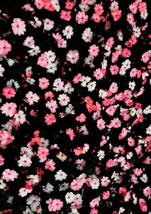 Fondo de pantalla ,flores | fondos de pantalla (wallpappers ...
