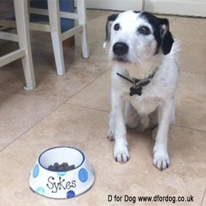 Did anyone see Sykes on Midsomer Murders last night with his lovely new personalised dog bowl :-)
