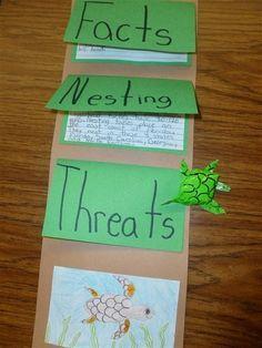 animal report template | Making Lemonade in Second Grade: Animal ...