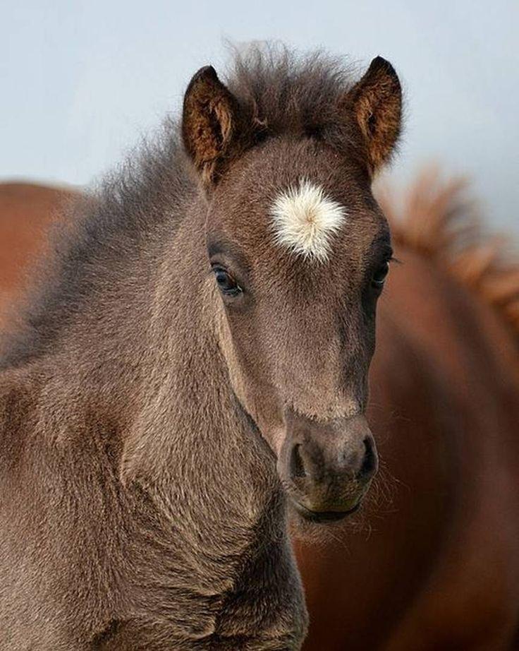 Mom say's I'm a star!!!!! #SaddlesForSale #Horses #MySaddleTrader