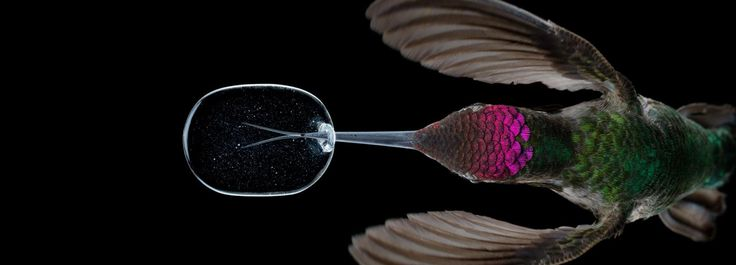 slow motion video reveals an unprecedented look at hummingbirds' lives