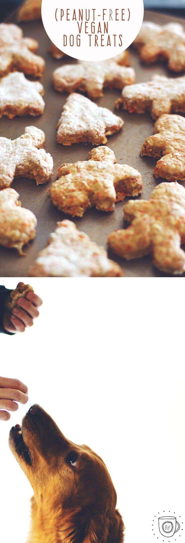 Best 25 vegan dog food ideas on pinterest dog treats vegan dog best 25 vegan dog food ideas on pinterest dog treats vegan dog biscuit recipe and organic dog food sciox Gallery