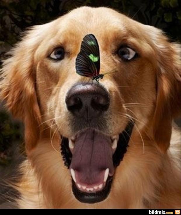 Lustige Hunde #5
