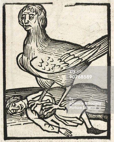 The Harpy, 1497.GERMANY - OCTOBER 09: Woodcut of a winged harpy and her prey. In Greek mythology, these were creatures with women�s heads and sharp claws. Illustration from �Hortus Sanitatis�, (�Garden of Health�), printed by Johann Pruss in Strasbourg in 1497. Hortus Sanitatis was the most popular and influential herbal of its time, and served as an encyclopaedia of all knowledge and folklore on plants, animals, and mineral