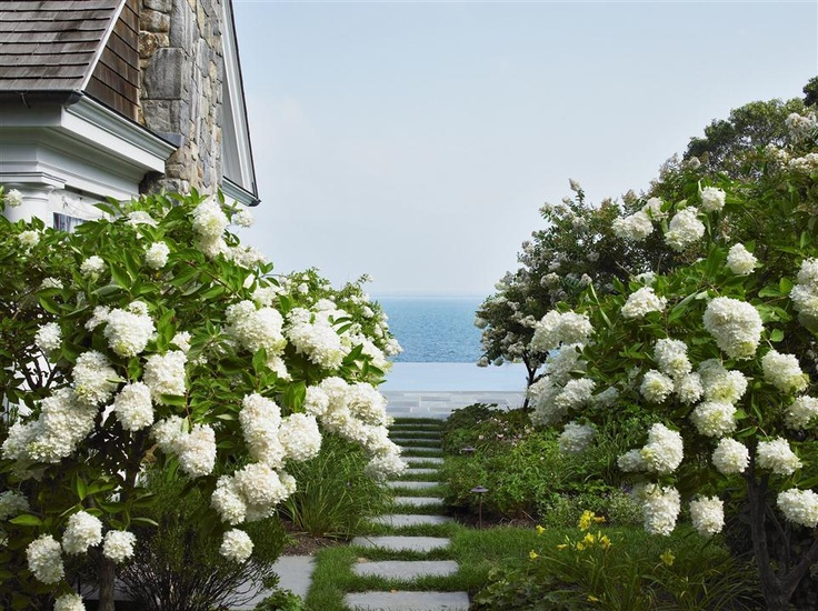 Path lined with white hydrangeas.