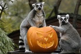 spirit halloween erie pa hours