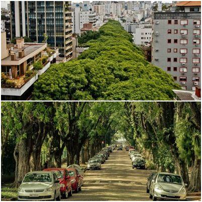Amazing street in Brazil... Rua 'mais bonita do mundo' fica no Brasil - Blog - Voz da Bahia - A Bahia tem Voz!