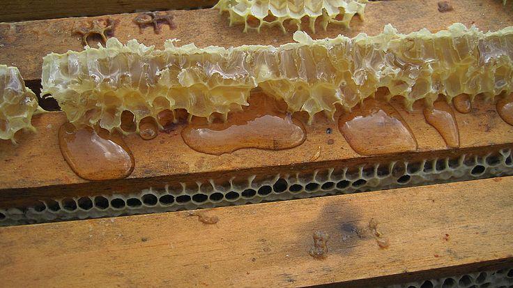 How honeybees make honey and store it for winter. Carolina Honeybees Farm