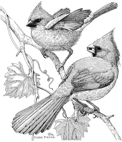 Beautiful Birds Pencil Art By Diane Pierce