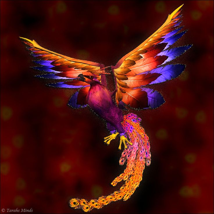 бойцами картинка феникс в полете что пубертатный