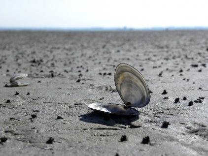 Schat uit de zee