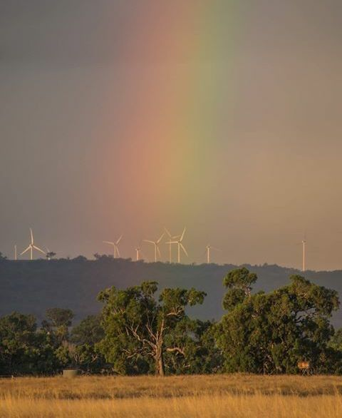 The amazing windfarms of the Glen Innes Highlands caught in a rainbow.  Photo by @br3nt0nh