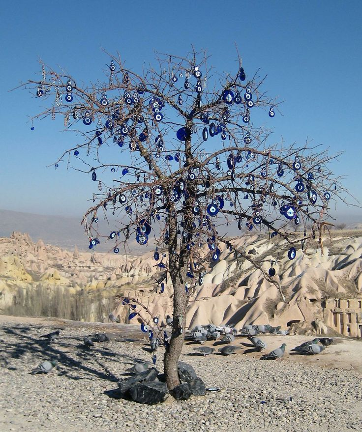Tree with apotropaion eye in Cappadocia, Pigeon valley near Uçhisar
