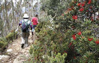 Climb Mt Wellington - Tasmania