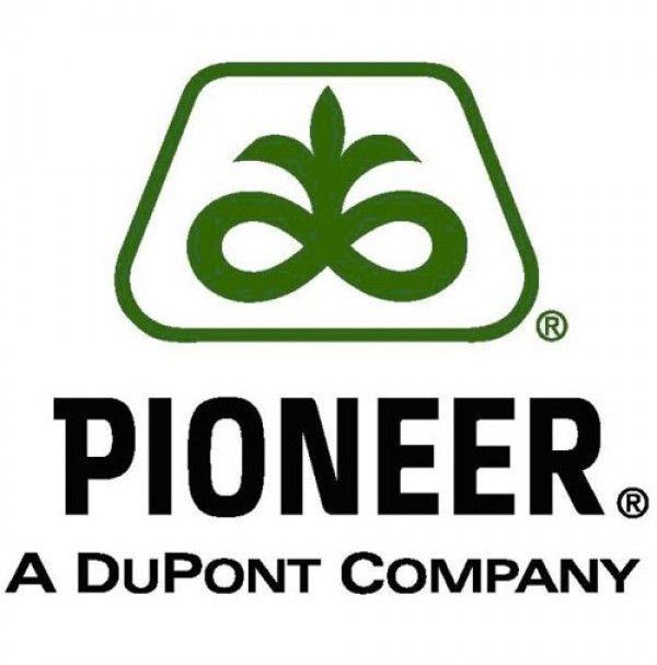 PORUMB PIONEER PR34Y02, SAC 80.000 BOABE