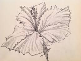 Image result for drawing hibiscus