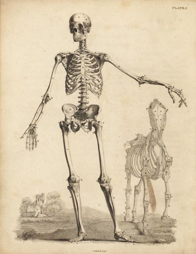 19世紀までの博物画・ボタニカルアート展   PARCO GALLERY X   パルコアート.com