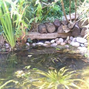 66 Best I 39 D Like A Pond Images On Pinterest Backyard